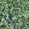 Brokoli 500 gr