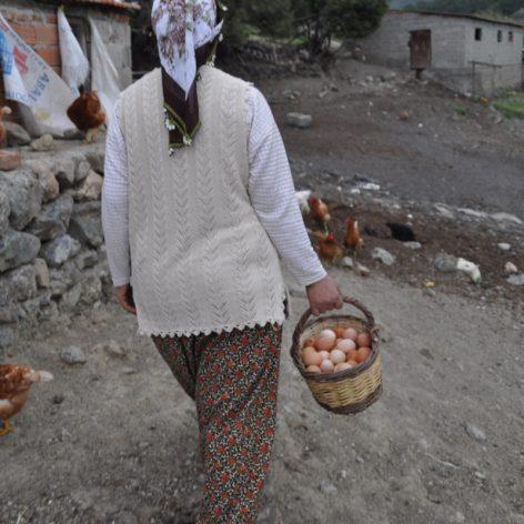 Köy Yumurtası 1 Adet