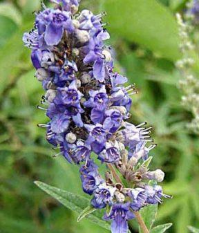 Hayıt Çiçeği Balı 250gr