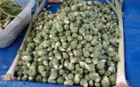 Brüksel lahana 1kg