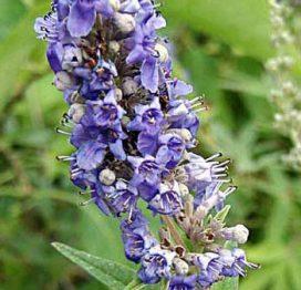 Hayıt Çiçeği Balı 500gr